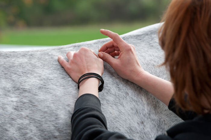 Chi Vet - Akupunktur am Pferd