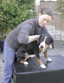 Chi Vet Chiropraktik für Hunde
