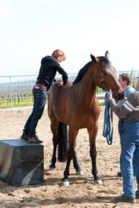 Chi Vet Chiropraktik am Pferd