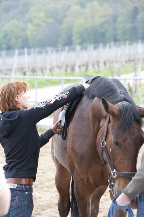 Chiropraktik zur Prävention bei Sportpferden
